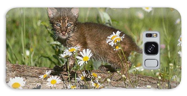 Bobcat Kitten In The Flowers Galaxy Case by Myrna Bradshaw