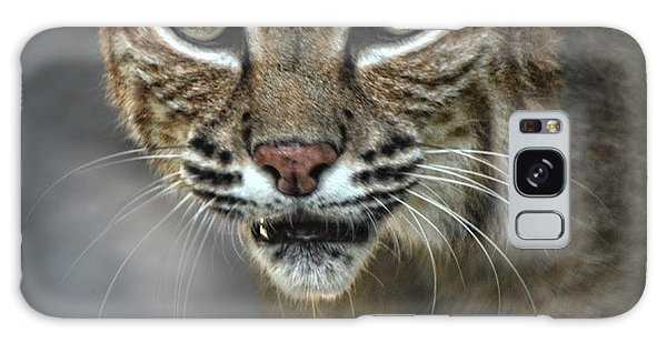 Bobcat Stare Galaxy Case
