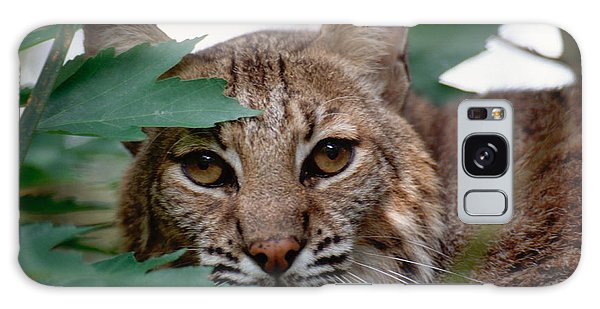 Bobcat With Maple Leaves Galaxy Case