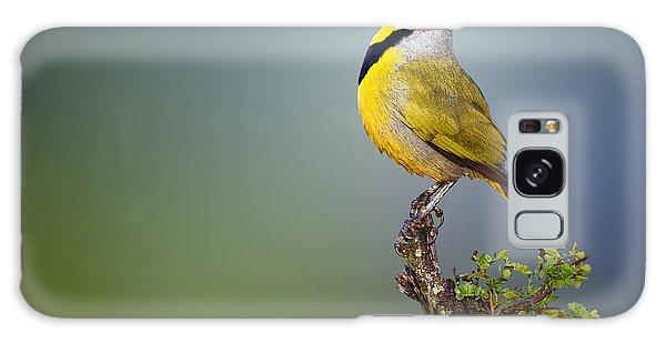Bird Galaxy Case - Bokmakierie Bird - Telophorus Zeylonus by Johan Swanepoel