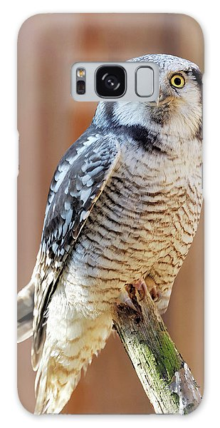 Boreal Forest Galaxy Case - Boreal Owl by Heiti Paves