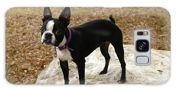 Boston Terrier On The Rock Galaxy Case by Donald Williams