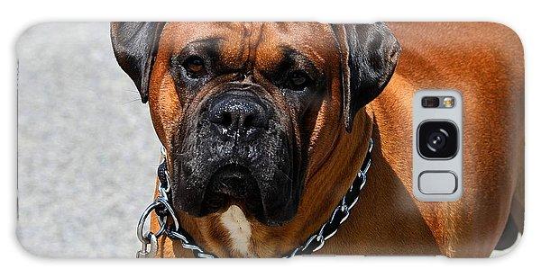 Boxer Galaxy Case by Kathy Eickenberg