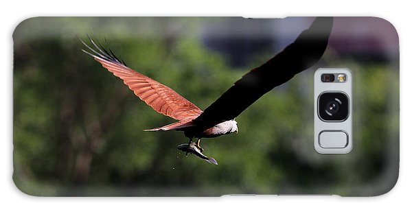 Brahminy Kite With Catch  Galaxy Case by Ramabhadran Thirupattur