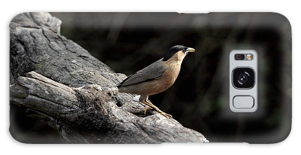 Brahminy Starling Galaxy Case by Ramabhadran Thirupattur