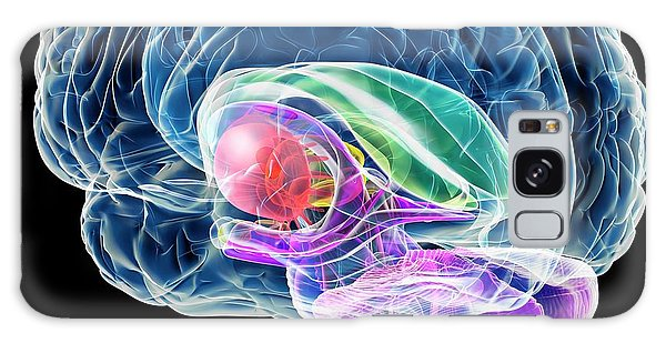 Brainstem Galaxy Case - Brain Anatomy by Roger Harris