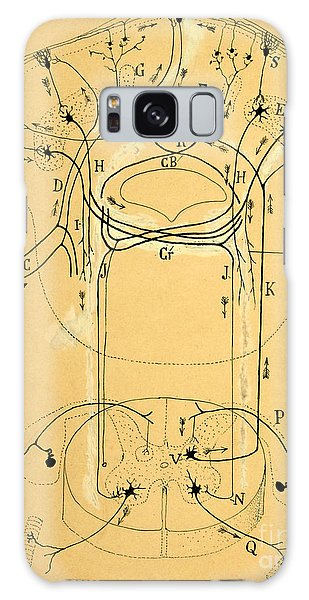 Brain Vestibular Sensor Connections By Cajal 1899 Galaxy Case