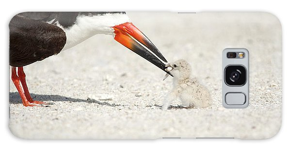 Black Skimmer And Chick. Galaxy Case