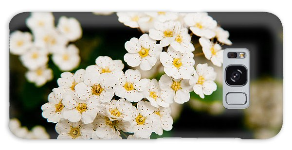 Bridal Veil Spirea Galaxy Case