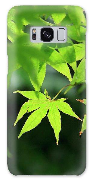 Kansai Galaxy Case - Bright Green Japanese Maple Trees by Paul Dymond