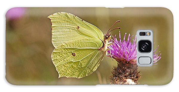 Brimstone On Creeping Thistle Galaxy Case by Paul Scoullar