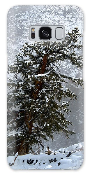 Bristlecone Pine In Snow Galaxy Case by Jane Axman