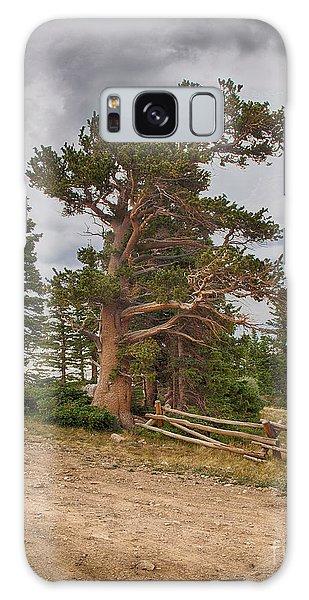 Bristlecone Pines Galaxy Case