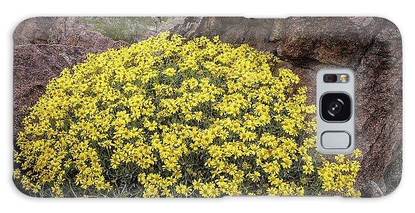 Desert Flora Galaxy Case - Brittlebush (encelia Farinosa) In Flower by Bob Gibbons/science Photo Library