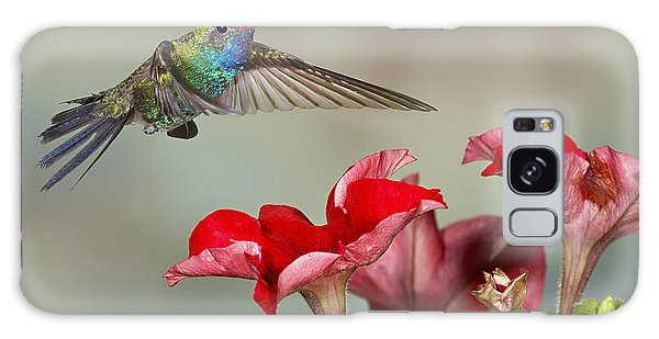 Broad Billed Hummingbird 4 Galaxy Case