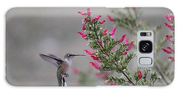 Broad Tail Hummingbird Galaxy Case