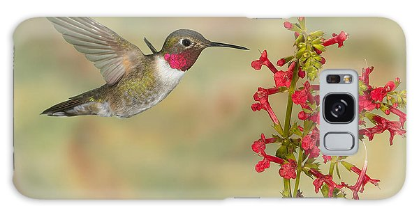 Broad-tailed Hummingbird 5 Galaxy Case
