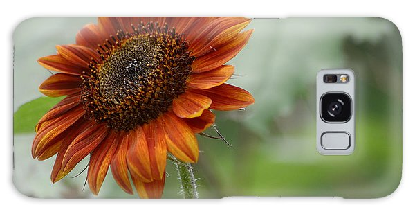 Bronze Sunflower Galaxy Case by Living Color Photography Lorraine Lynch