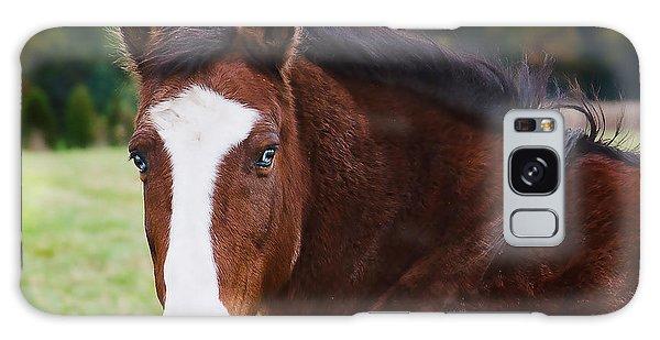 Brown Horse-blue Eyes Galaxy Case