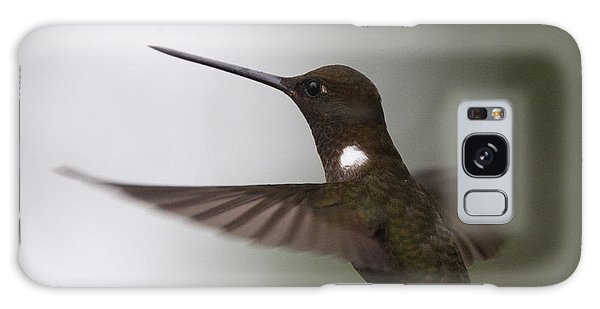 Brown Inca Hummingbird Galaxy Case