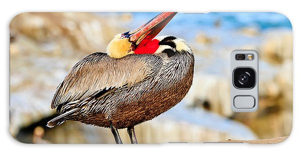 Brown Pelican Mating Season Display Galaxy Case