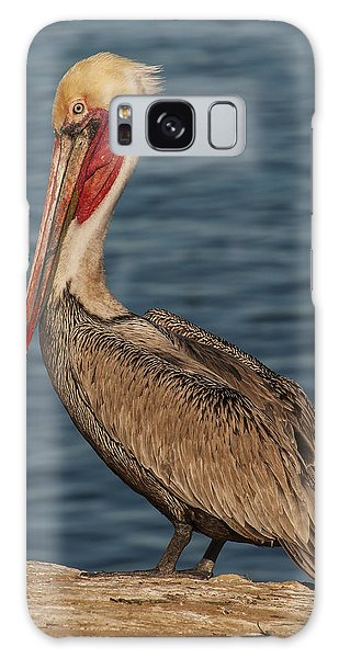 Brown Pelican Portrait 2 Galaxy Case