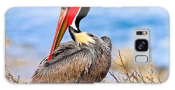 Brown Pelican Posing Galaxy Case