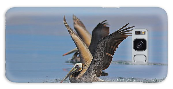 Brown Pelicans  Galaxy Case