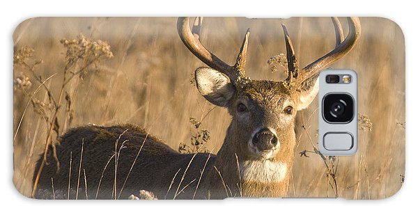 Buck In Field Galaxy Case by Larry Bohlin