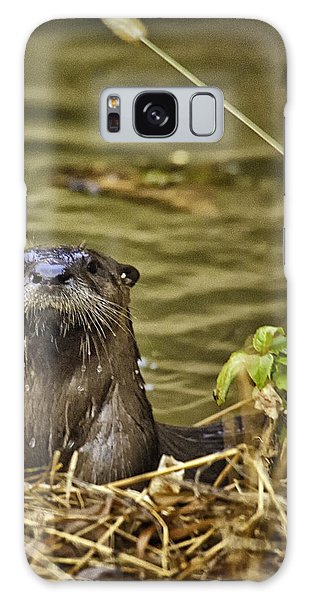 Buffalo National River Otter  Galaxy Case