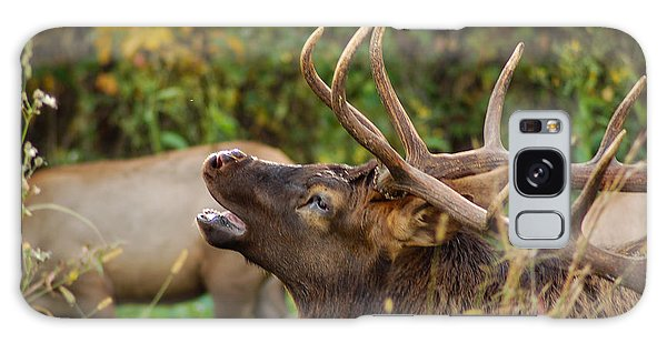 Bugling Bull Elk Galaxy Case