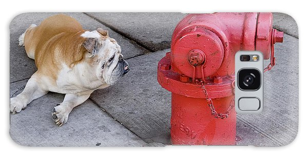 Bull Dog And The Fire Hydrant Standoff Galaxy Case by Linda Matlow