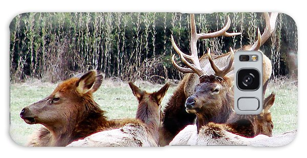 Bull Elk And His Girls 2 Galaxy Case