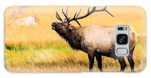 Bull Elk - Colorado Galaxy Case