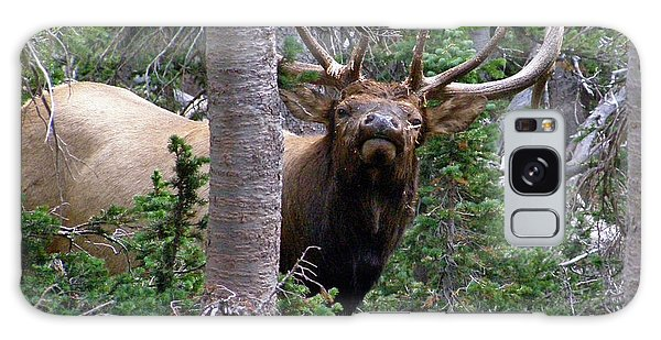 Bull Elk Looking At Me Galaxy Case