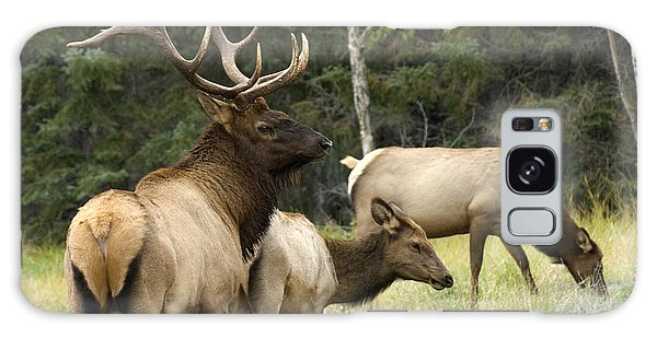 Bull Elk With His Harem Galaxy Case