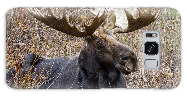 Bull Moose In Autumn Galaxy Case by Jack Bell