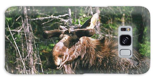 Bull Moose In Spring Galaxy Case by David Porteus