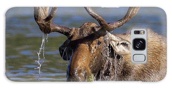 Bull Moose Sampling The Vegetation Galaxy Case by Jack Bell