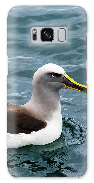 Albatross Galaxy Case - Buller's Albatross (thalassarche Bulleri by Micah Wright