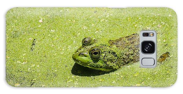 Bullfrog In Duckweed Galaxy Case by Bradley Clay
