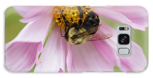Bumblebee On A Blossom Galaxy Case