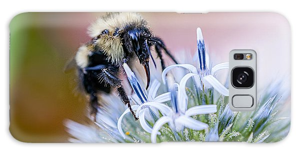 Bumblebee On Thistle Blossom Galaxy Case by Marty Saccone