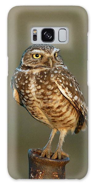 Burrowing Owl At Sunset Galaxy Case