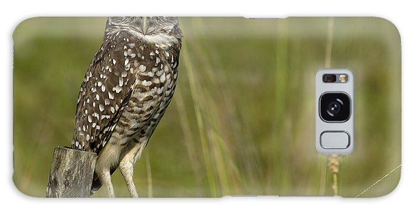 Burrowing Owl Stare Galaxy Case by Meg Rousher