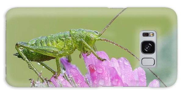 Bush Cricket Galaxy Case