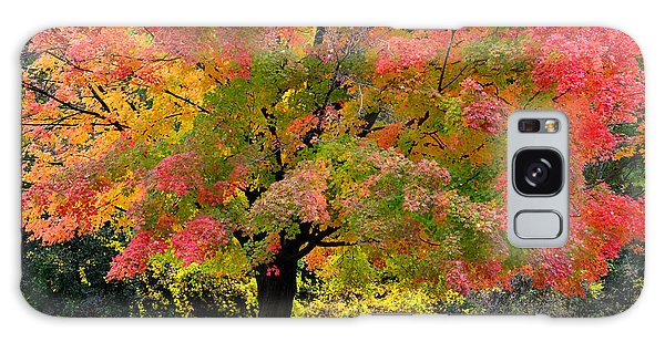 Busse Woods Fall Color Galaxy Case