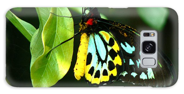 Butterfly On Leaf Galaxy Case by Laurel Powell