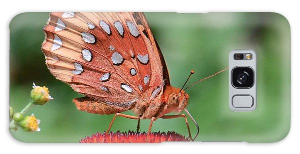 Butterfly Sipping A Coneflower Galaxy Case