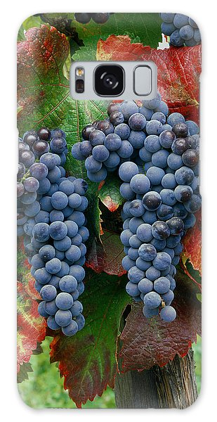5b6374-cabernet Sauvignon Grapes At Harvest Galaxy Case